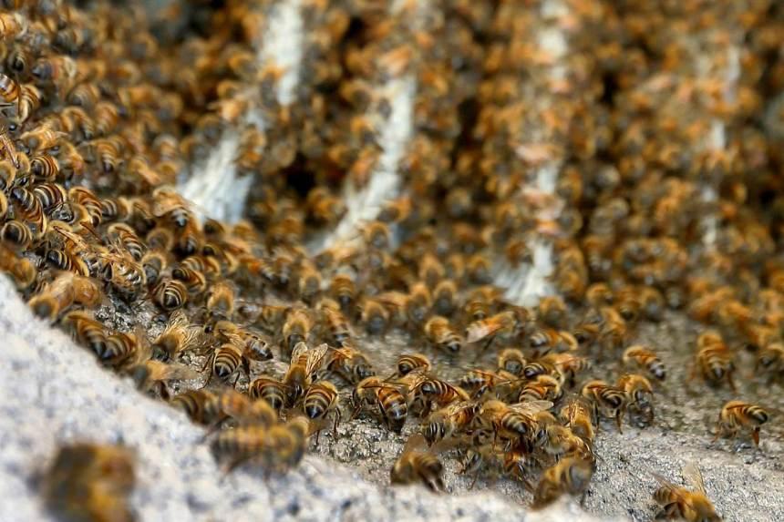 150923-bee-attack-yh-0452p_a22490d744ec3c50fa1da44b59075f67-nbcnews-fp-1200-800