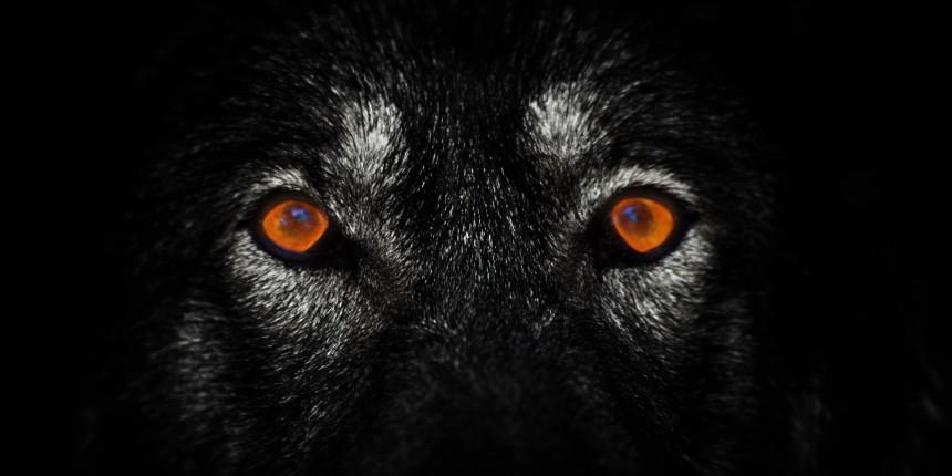 o-lone-wolf-facebook