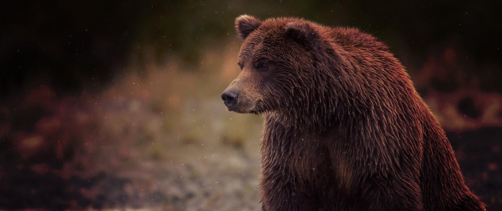 Ele foi tirar uma selfie com um urso e… Não deu muito certo. – Sobrecast 70