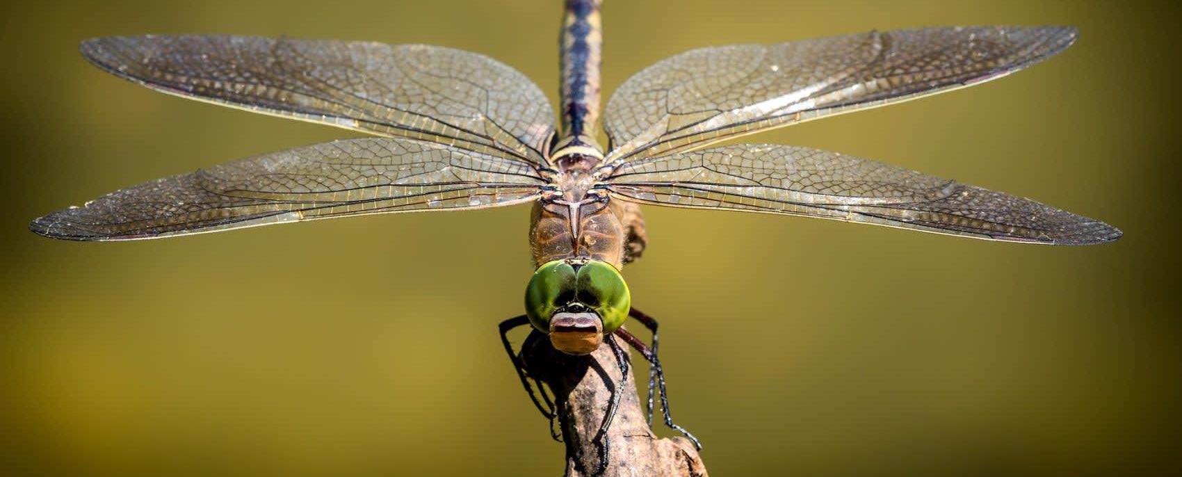 """O mundo dos insetos está próximo de um """"Colapso catastrófico"""""""