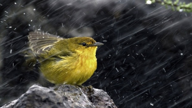 bird-storm