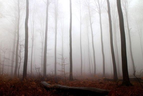 fog-cover